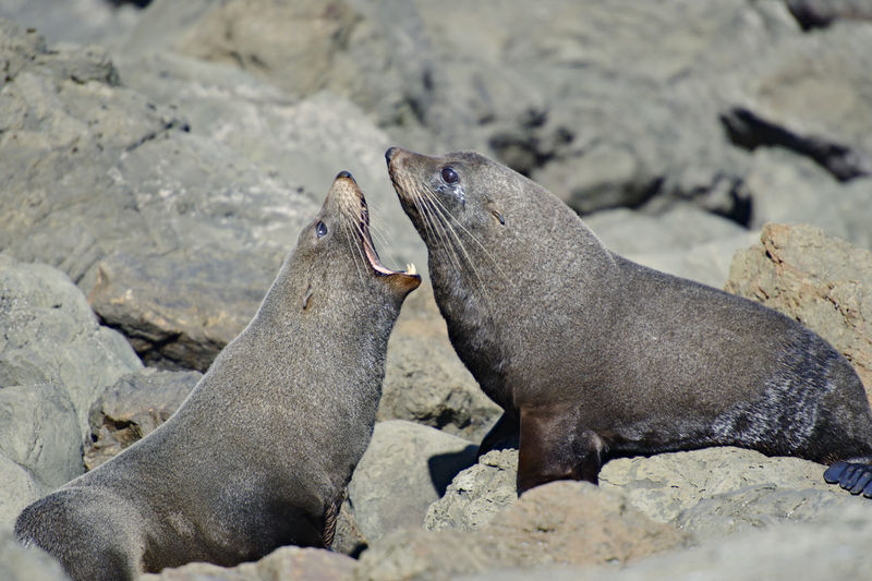 Seals on rock during sunny day