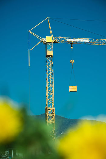 Construction crane in residential area with unsharp dandelion flowes in the foreground Construction Site EyeEmNewHere Yellow Flower Blue Cable Clear Sky Crane Crane - Construction Machinery Dandelion Day Low Angle View Machinery Metal Nature No People Outdoors Sky Sunlight Technology Yellow