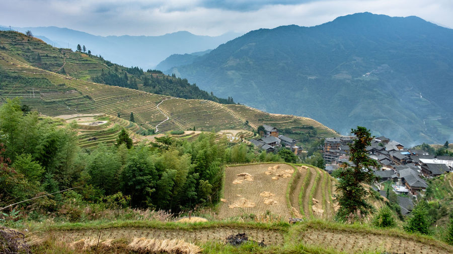 Local village and rice terrace harvesting at Longsheng & Rice Fields, China. Rice Terraces Rice Field Longsheng-China Longsheng Outdoors High Angle View No People Rural Scene Day Agriculture Growth Green Color Architecture Tranquility Nature Land Mountain Range Tranquil Scene Tree Plant Environment Beauty In Nature Landscape Mountain Scenics - Nature Sky