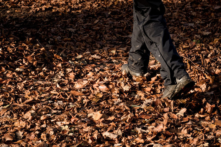 Low section of person standing on dry leaves on field