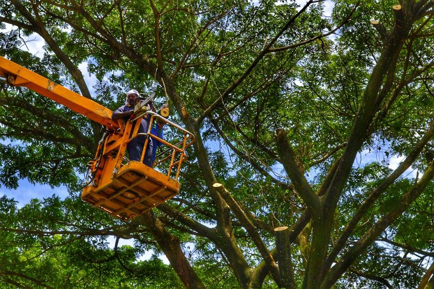 Men with chainsaws cutting tree from elevated mechanical basket, Penang, Malaysia. Low Angle View Tree Hanging Branch Day Green Color Growth Outdoors Nature Sky Nawfal Johnson Demonic Entities Cutting Trees Men At Work  Men At Work  Nature Hanging Basket Destroying Nature