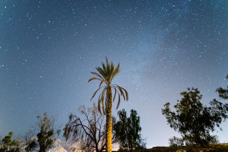 A photo series of nightscapes taken in Sinai the last week of 2016 Egypt Galaxy Milky Way Night Photography Nightscape Palm Tree Sinai Stars Tree