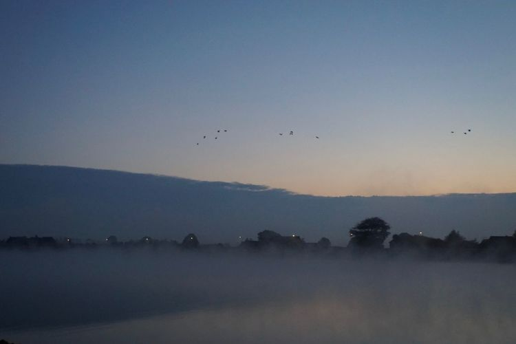 a foggy autumn morning along the river IJssel Animal Themes Autumn Beauty In Nature Bird Bird Migration Blue Calm Clear Sky Dawn Flock Of Birds Flying Ijssel Majestic Nature No People Non-urban Scene Outline Remote Scenics Silhouette Solitude Sunrise - Dawn Tranquil Scene Tranquility