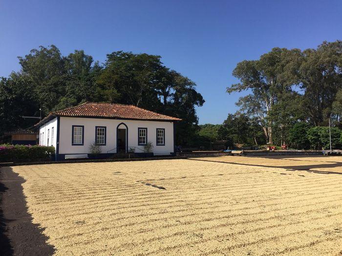Fazenda Pessegueiro Cafe Fazenda
