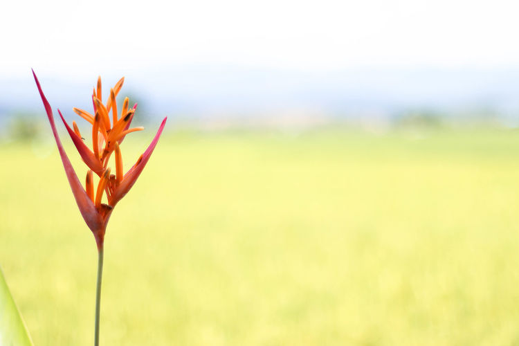 Beauty In Nature Close-up Day Field Flower Growth Horizontal Landscape Nature No People Outdoors Plant