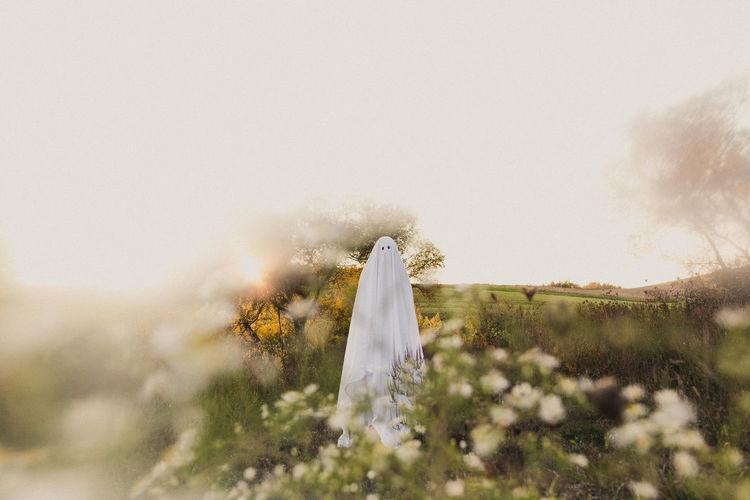 White flowers on field against sky