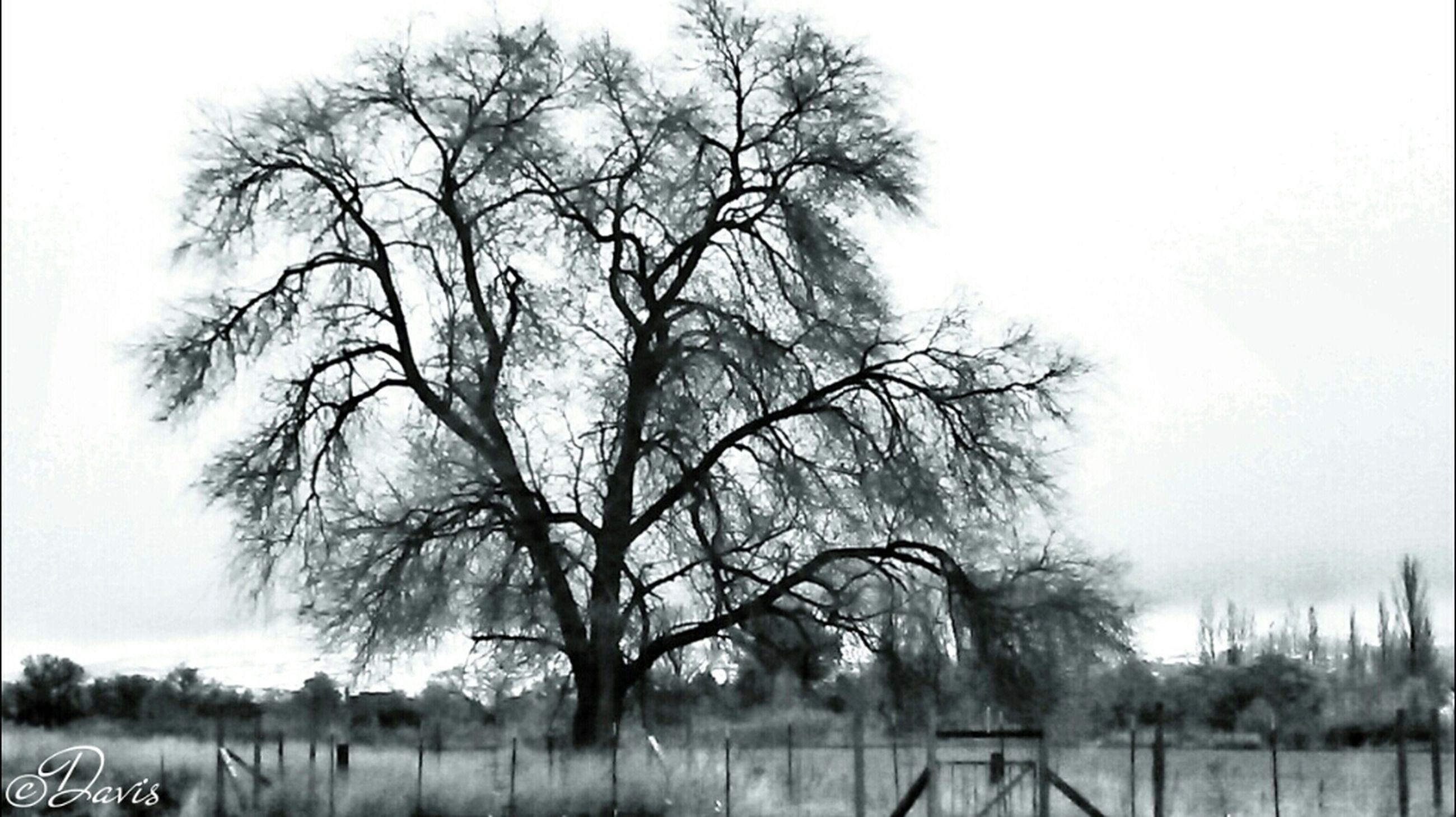 bare tree, tree, fog, tranquility, foggy, branch, tranquil scene, nature, landscape, field, tree trunk, beauty in nature, scenics, weather, growth, non-urban scene, day, no people, outdoors