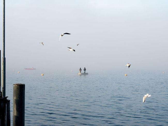 #boat #dove #Fisherman #fog #Lake #reed