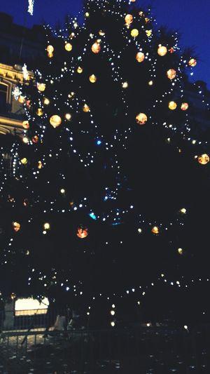 24 sleeps till Christmas ? Christmas Christmas Tree
