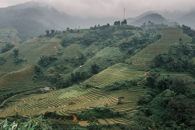 Sapa in winter Agriculture Landscape Environment Scenics - Nature Rural Scene Growth Land Plant Farm Terrace Field Nature Mountain Terraced Field Tranquil Scene Rice Paddy Rice - Cereal Plant Green Color Tranquility Beauty In Nature No People Outdoors Plantation