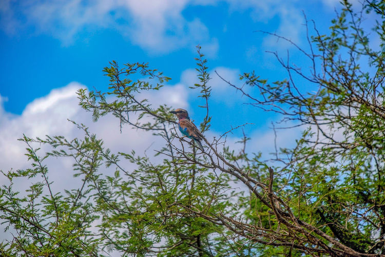 Colorful bird in the wild. Leaf Side View One Animal Young Animal Beak Birdwatching Bird Photography Close-up Day Portrait Freedom Sitting Animal Outdoors Wings Colors Feather  Beauty In Nature Wildlife Nature Wild Tree Bird Branch Forest Blue Leaf Sky Animal Themes Cloud - Sky