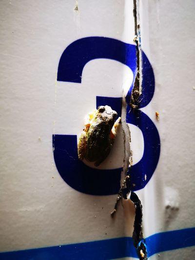 Frog Hanging