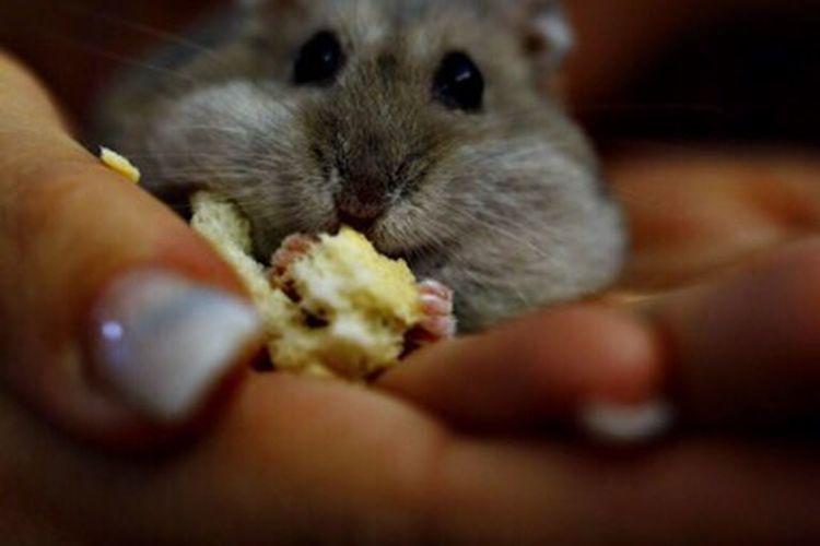 Briciola Criceto Hamster Nature_collection Love EyeEm Nature Lover