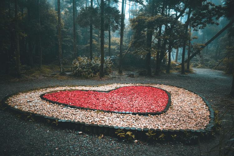 A love shape in