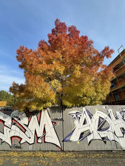 Tree by building against sky during autumn
