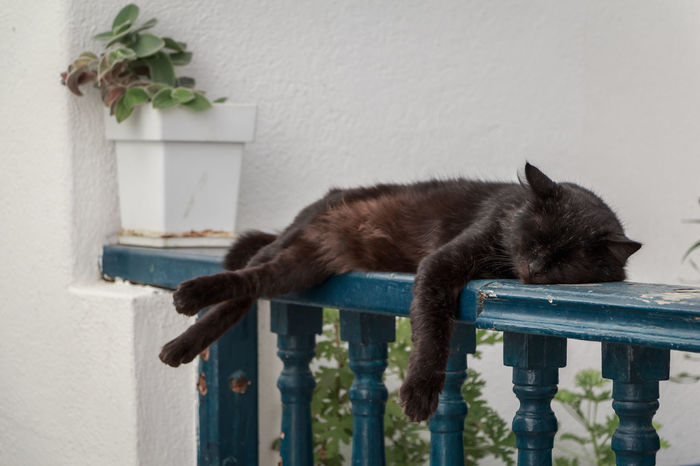 Animal Themes Cat Cats Greece Nap One Animal Sieste Sleeping Sleepy Sommeil