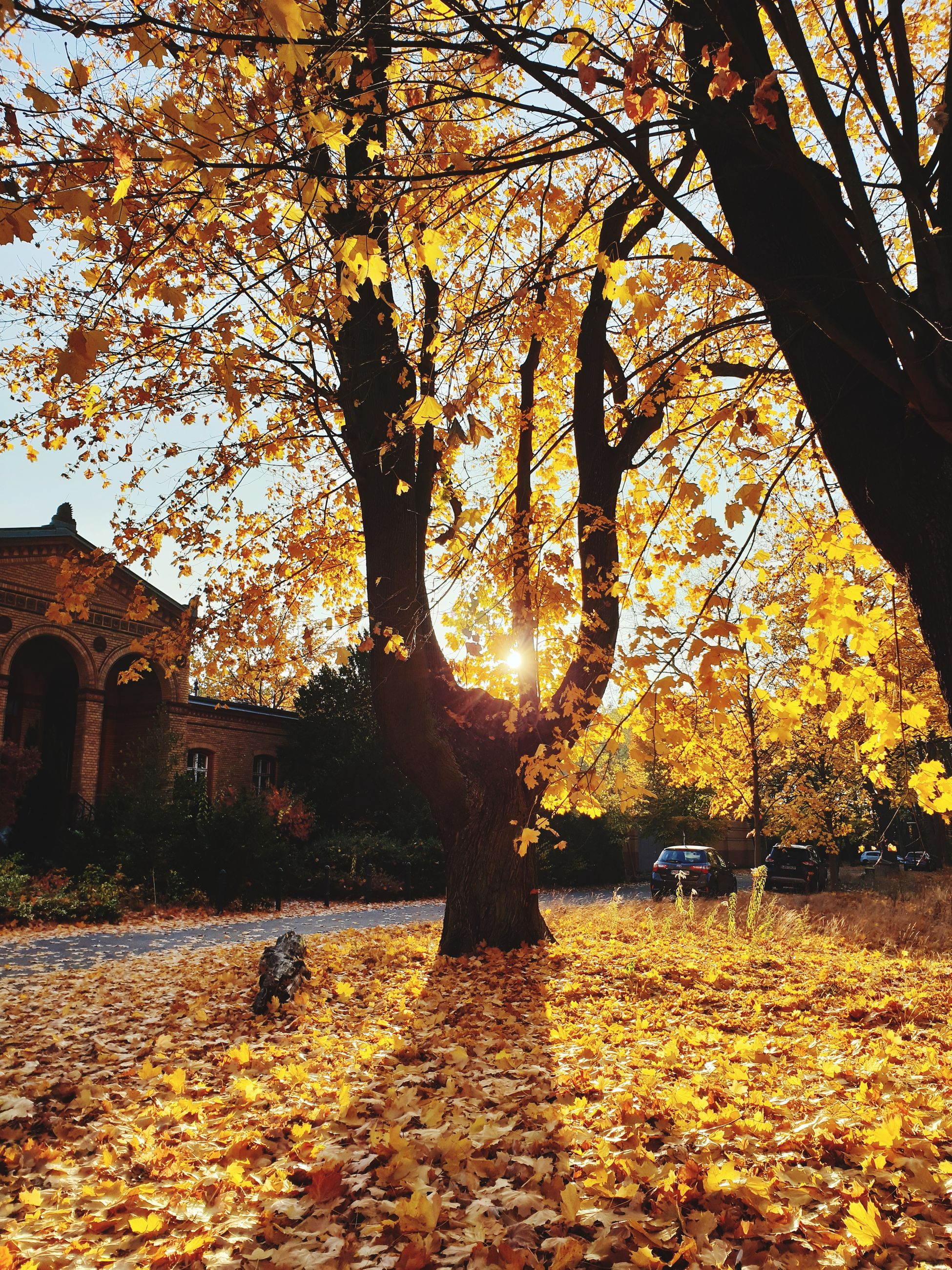 tree, autumn, change, plant, architecture, building exterior, plant part, leaf, nature, built structure, orange color, building, sky, outdoors, no people, sunlight, beauty in nature, branch, growth, day, leaves, fall, autumn collection
