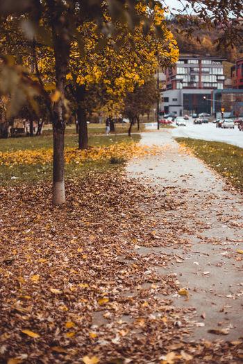 Sunlight falling on autumn leaves in park