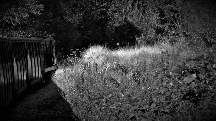 Romney, Hythe and Dymchurch Railway 2017 2017 2017 Year 2017 Photo England, UK Great Britain Kent Railways Kent UK RHDR Romney Hythe And Dymchurch Railway Romney, Hythe & Dymchurch Railway Tourist Attraction  Travel Travel Photography UK Railway United Kingdom Day Kent England Nature No People Outdoors Plant Travel And Tourism Travelphotography Tree Uk England