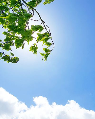 Sky Cloud - Sky Nature Blue Tree Outdoors Low Angle View Day Branch Green Color No People Leaf Beauty In Nature Close-up Freshness