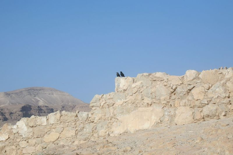 Bird in the Masada fortress in Israel Bird Blue CANAAN Desert Fort Fortress Geology Israel Judea Masada. Mountain Nature Palestine Rock Rock Formation Scenics Tranquil Scene Tranquility
