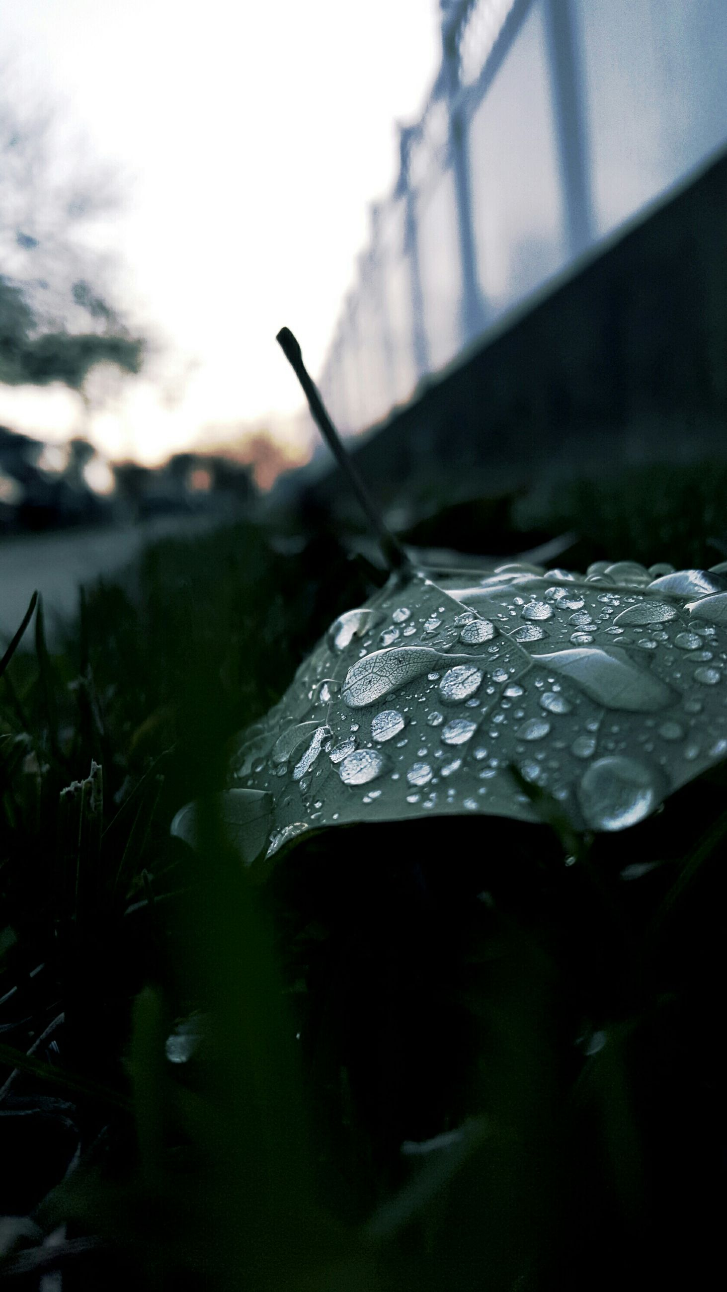 drop, focus on foreground, close-up, wet, water, selective focus, plant, nature, leaf, fragility, rain, growth, raindrop, outdoors, day, beauty in nature, dew, sky, grass, no people