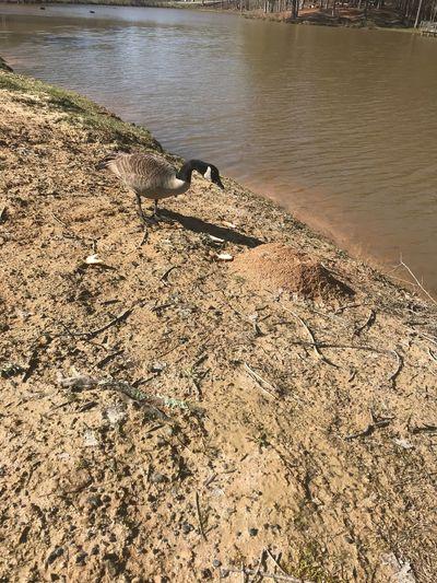 Feeding The Ducks Duncan Park - Fairbun , Ga Beach Water Land Nature Sand Sunlight Tranquility