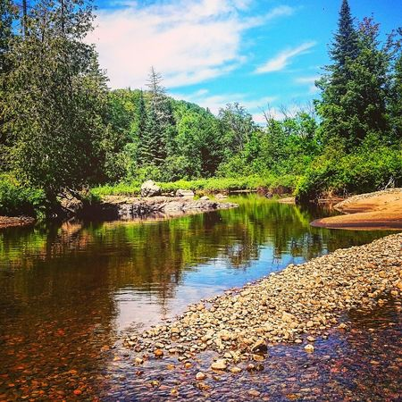 Hanging Out Hello World Enjoying Life Tree_collection  Summer2015 Myparadise Relaxing EyeEm Nature Lover Nature Photography Riverscape