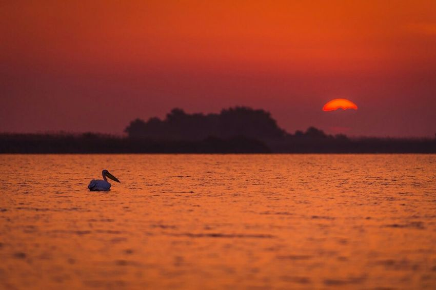 Sunset Sun Day Silhouette Dusk Outdoors Water Scenics Landscape Nature Nautical Vessel Romania Adrian Mitu Mila 23 Travel Destinations Delta Dunarii Animal Themes Animal Animals In The Wild Animal Wildlife Bird Clouds Mid-air Flying Pelikan