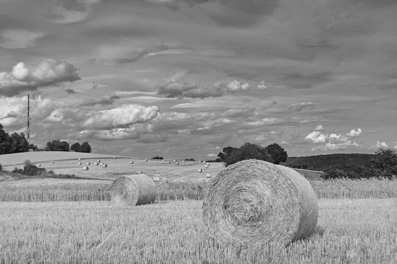 Field Landscape Plant Land Sky Agriculture Environment Hay Cloud - Sky Bale  Rural Scene Beauty In Nature Nature Farm Tranquil Scene Tranquility Scenics - Nature Harvesting Day No People Outdoors Rundstrohballen Stoppelfelder Black And White