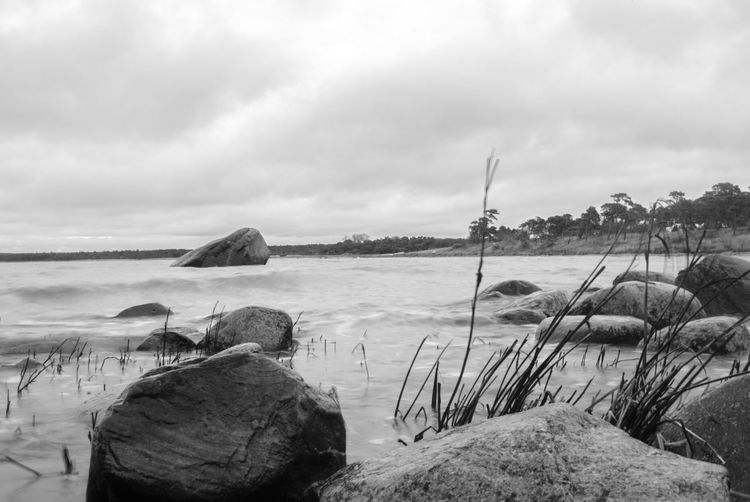 Gotland Sweden Nature Black'n'white  Lightroom
