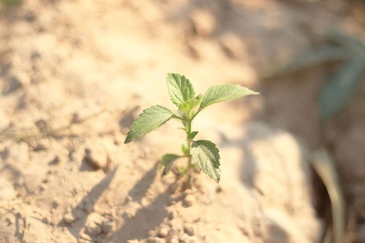 young plant in