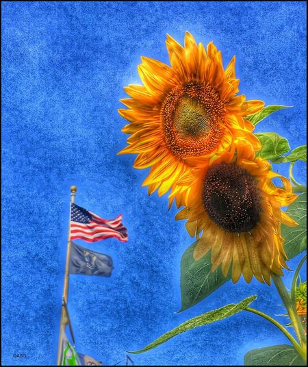 Flag w/ Sunflowers - 9/6/18 EyeEmNewHere Close-up Flowering Plant For My Country, NOT This Administration! Malephotographerofthemonth My Point Of View