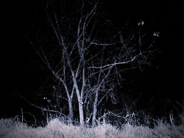 Firework display over bare trees in forest at night