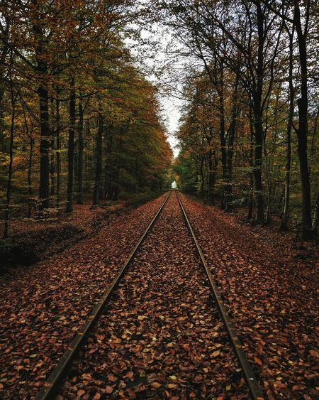 Nature Autumn Beauty In Nature Natureporn Landscape_Collection Landscapephotography Landscape_lovers Nature_perfection Nature_collection Naturelovers Forestwalk Forest Landscape Naturephotography Natureza Railway Railroads Railway Tracks Naturehippys Wanderlust Hiking Pictures Hikingtrip Forestry Trees And Nature Treelovers