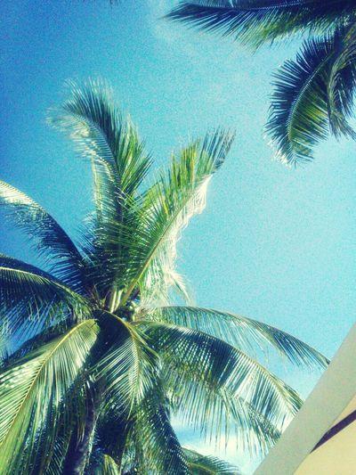 Life Is A Beach Ixtapa Mexico