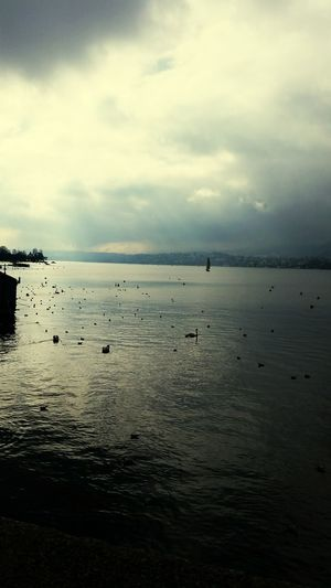 Rheni Old Coloro In The City Zurich, Switzerland Birds Color City Rheni Zutich Water Sea Tranquility Scenics Silhouette Nature Beach Beauty In Nature Sky Horizon Over Water No People Outdoors Bird Landscape Animal Themes Sunset Tranquil Scene Cloud - Sky Day