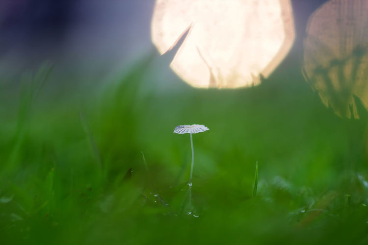 background of grass and mushrooms with bokeh Plant Growth Beauty In Nature Selective Focus Close-up Vulnerability  Fragility Nature Freshness Green Color Flower No People Mushroom Land Flowering Plant Field Grass Fungus Outdoors Day