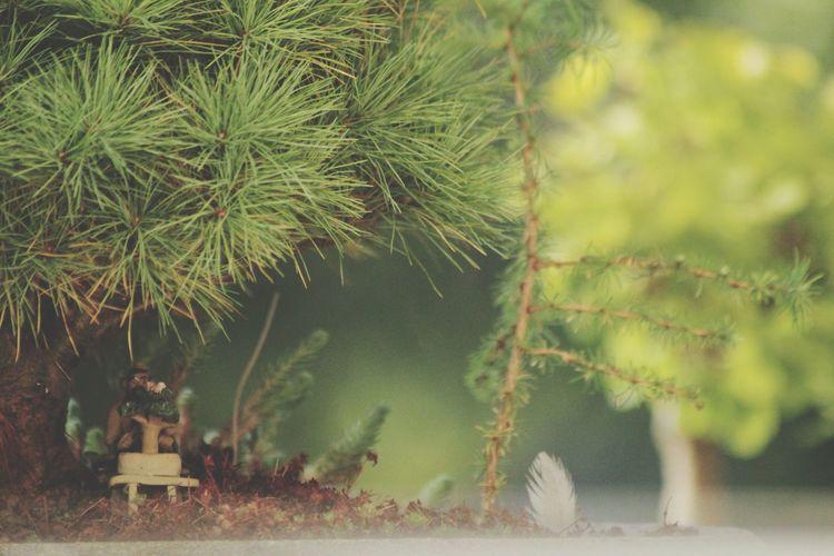 Nature Green Color Outdoors Tree Beauty In Nature Close-up Miniature Eyeemphotography Bonzai In My Garden Bonsai Bonsai Trees Miniature Landscape Little Things EyeEm Best Shots - Nature EyeEm Best Shots Eyemgallery Eyem Nature Lovers  Naturephotography Naturelovers Bonzaitree Bonsai Tree
