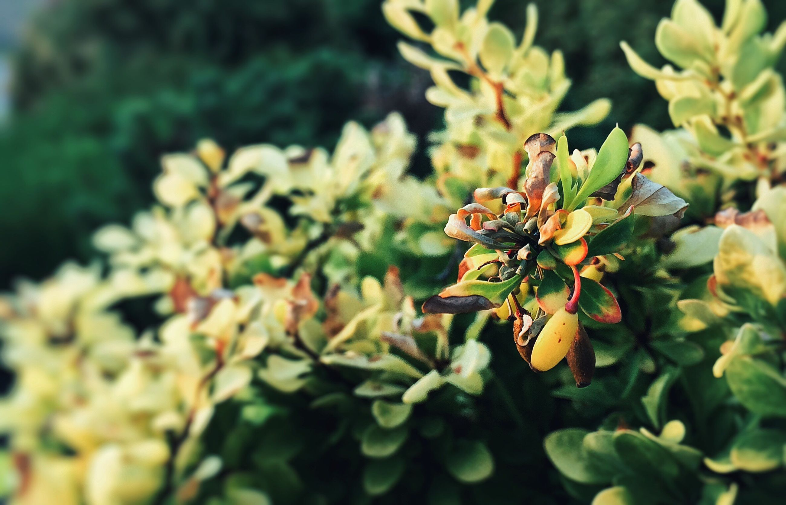 growth, leaf, focus on foreground, flower, nature, close-up, freshness, plant, beauty in nature, branch, selective focus, green color, fragility, day, outdoors, bud, tree, no people, stem, yellow