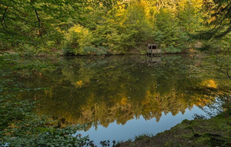 Autumn Autumn Colors Farbrausch Herbststimmung Spiegelung Im Wasser Herbstfarben Lake Leaves Outdoor Photography Reflections In The Water