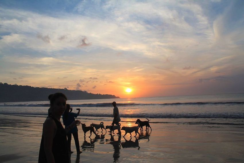 Sunset in Bali Sunset Sunset_collection Sunset Silhouettes The EyeEm Collection Jimbaranbeach Jimbaran Beach Bali, Indonesia Bali INDONESIA Indonesia_photography Indonesia_allshots Bali Beach Balinese Life Island Life 43 Golden Moments Dog Silhouette ASIA Nature Nature_collection Nature Photography Naturelovers Showcase July Beachphotography Beach Photography Beach Life