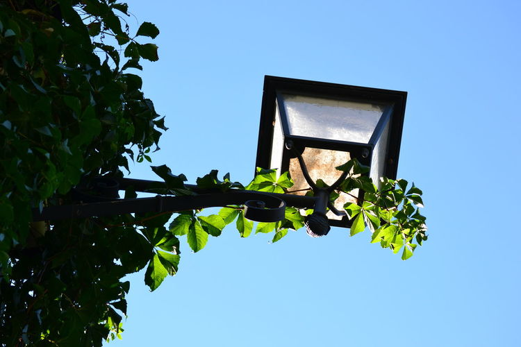 Low angle view of plants on gas light against clear sky