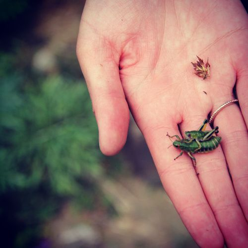 Grasshoppers on Tour Green Grasshopper Grasshopper Travelphotography Animal Themes Wildlife & Nature Kirgistan Beautiful Nature Animals In The Wild Animalslove Wonderful Nature Nature Photography Nature Human Hand Tree Holding Insect Close-up Fishing Hook