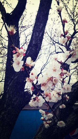 Bahardali Spring Yasasin Ilkbahar