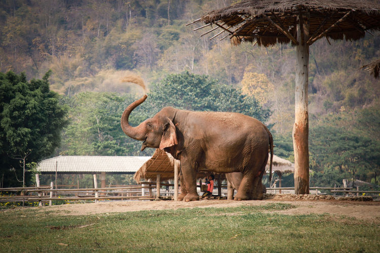 Side view of elephant standing on land