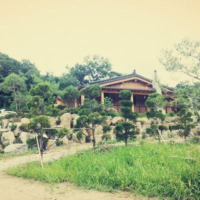 남양주 금곡 뻬이보릿 XD