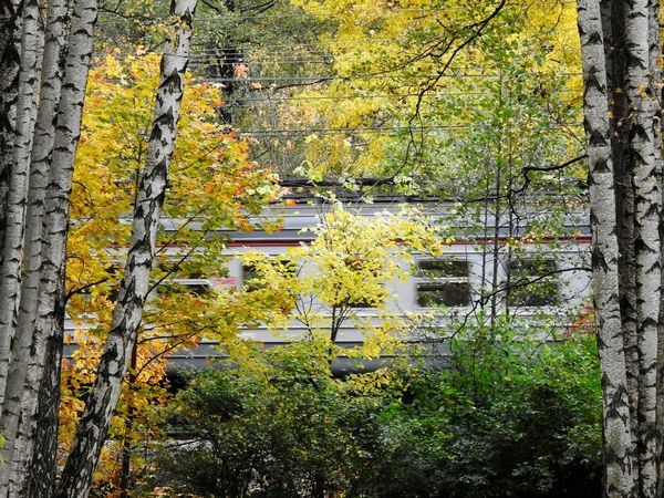 Train In Forest Train Elektrichka Udelnii Park Beauty In Nature Nature Day Freshness Leaf🍂 Park Autumn🍁🍁🍁 Forest Tree Area Sunny Day 🌞 Autumn Colors Of Autumn Colors Of Sankt-Peterburg Sankt-Petersburg Perspectives On Nature