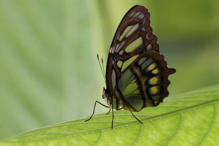 Macro shot of butterfly perching on green leaf