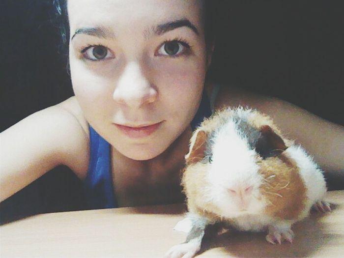 Guinea Pig Mylittlefriend